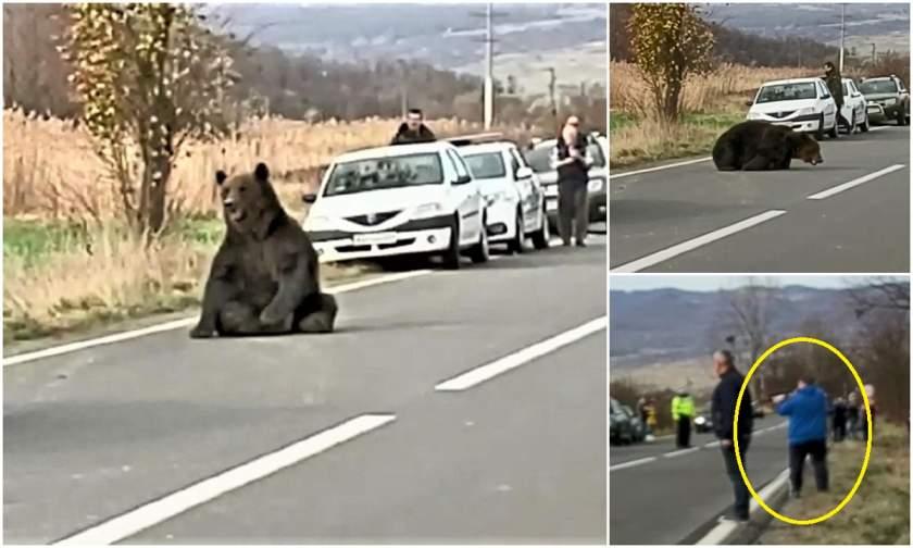Kilőtték a Parajd és Szováta között elgázolt medvét